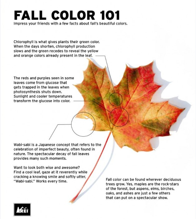Fall Color Report Archives