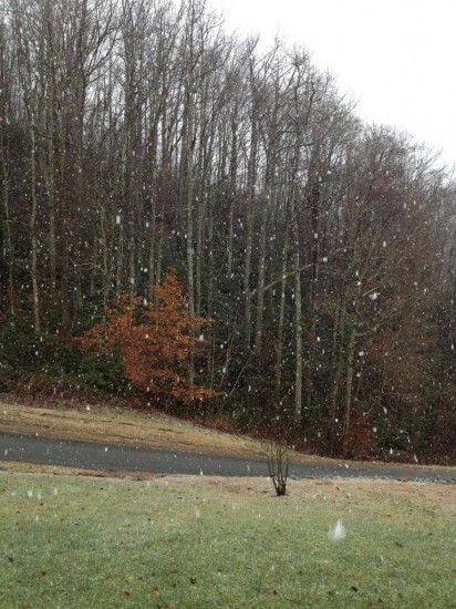 Big snowflakes falling in Vilas off Laurel Fork. Photo from Megan Ross