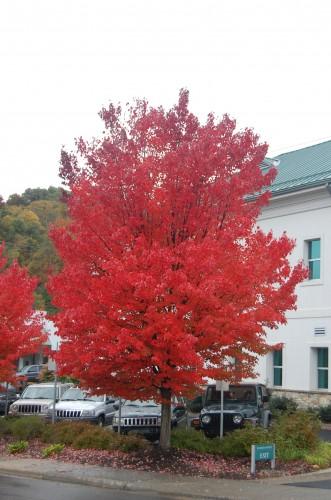 Boone_Oct 11_2014_KR (2)