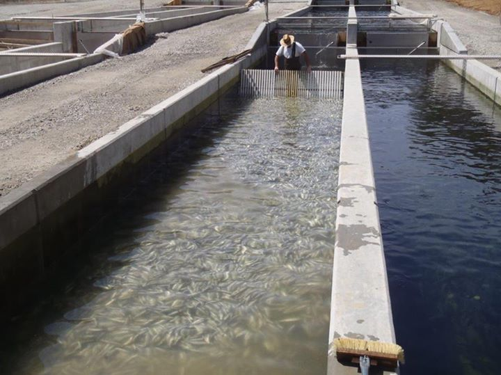 Armstrong Fish Hatchery3