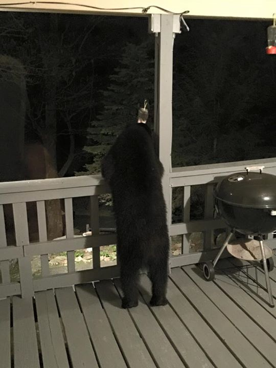 Bear1_Jim Clarke
