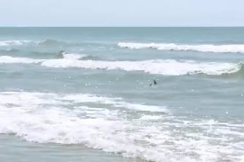 High Country Family Captures Video Of Sharks On The Coast