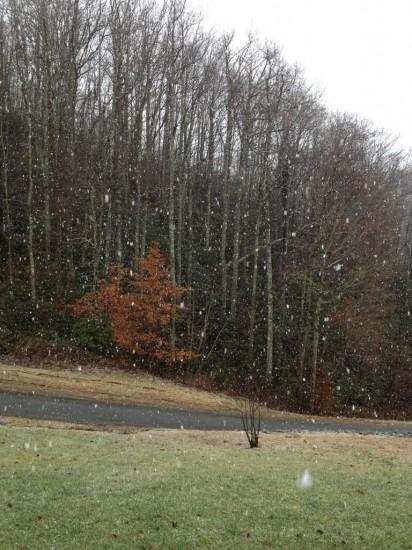 Big snowflakes falling in Vilas off Laurel Fork. Photo from Megan Ross