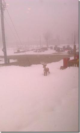 Feb 7_snow on Beech Mtn_Debbie Canady