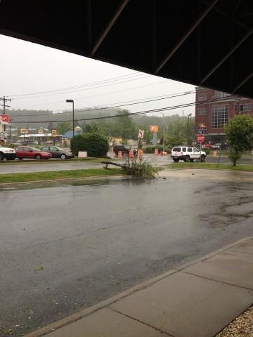 June 13 - Tree down at at at Vistors Center. Photo: Candice Cook