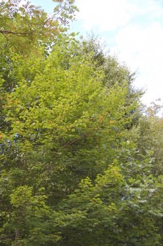 Leaves Aug 6, 2013 (1)