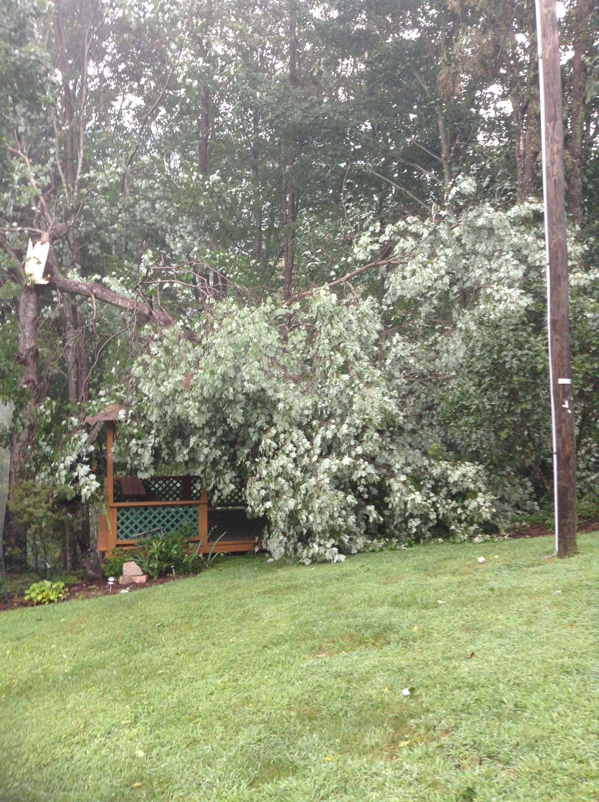 Fallen tree Valle Crucis (2)